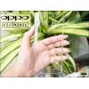 เคส OPPO Find 5 เนื้อPVC